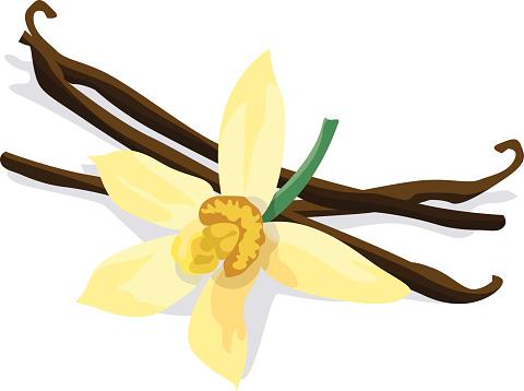 Vanilla bean and flower on white background