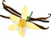 istock Vanilla bean and flower on white background 467338876