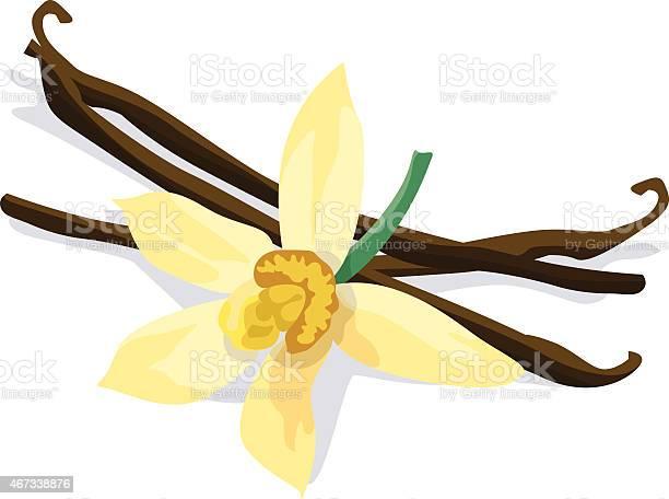 Vanilla bean and flower on white background vector id467338876?b=1&k=6&m=467338876&s=612x612&h=0fyxl7lrgyas qcriaqldbdsa7fo6ei55h7dqggfwyi=