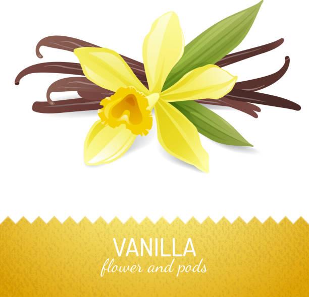 stockillustraties, clipart, cartoons en iconen met vanilla flower and pods - vanille