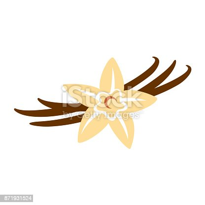 istock Vanilla flower with pods color silhouette 871931524