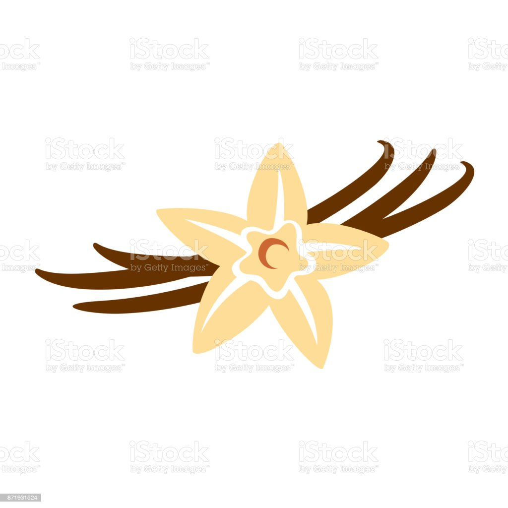 Vanilla flower with pods color silhouette vector art illustration