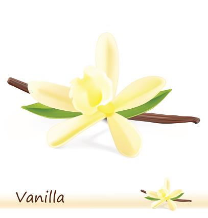Vanilla flower with pods on white background.