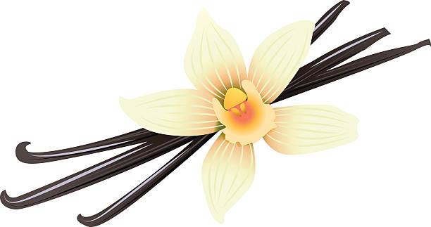 stockillustraties, clipart, cartoons en iconen met vanilla pods and flower - vanille roomijs