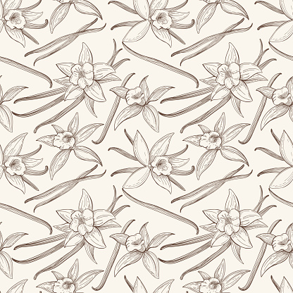 Vanilla stick and flower vector hand drawn seamless pattern