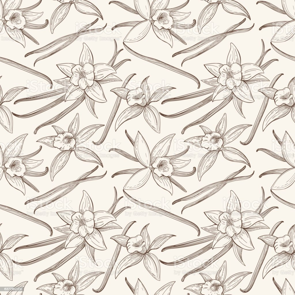 Vanilla stick and flower vector hand drawn seamless pattern vector art illustration