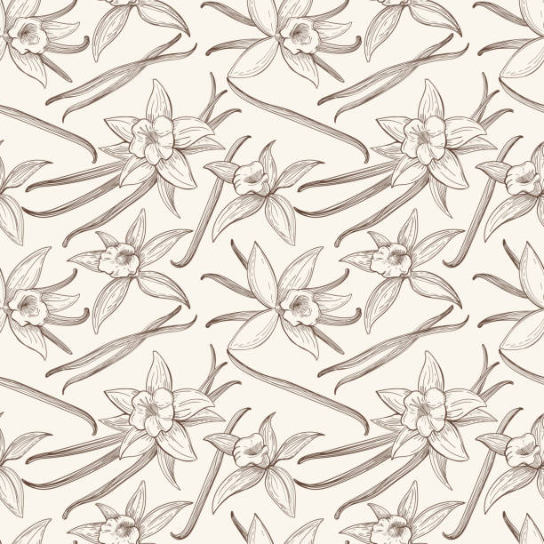 stockillustraties, clipart, cartoons en iconen met vanilla stick and flower vector hand drawn seamless pattern - vanille