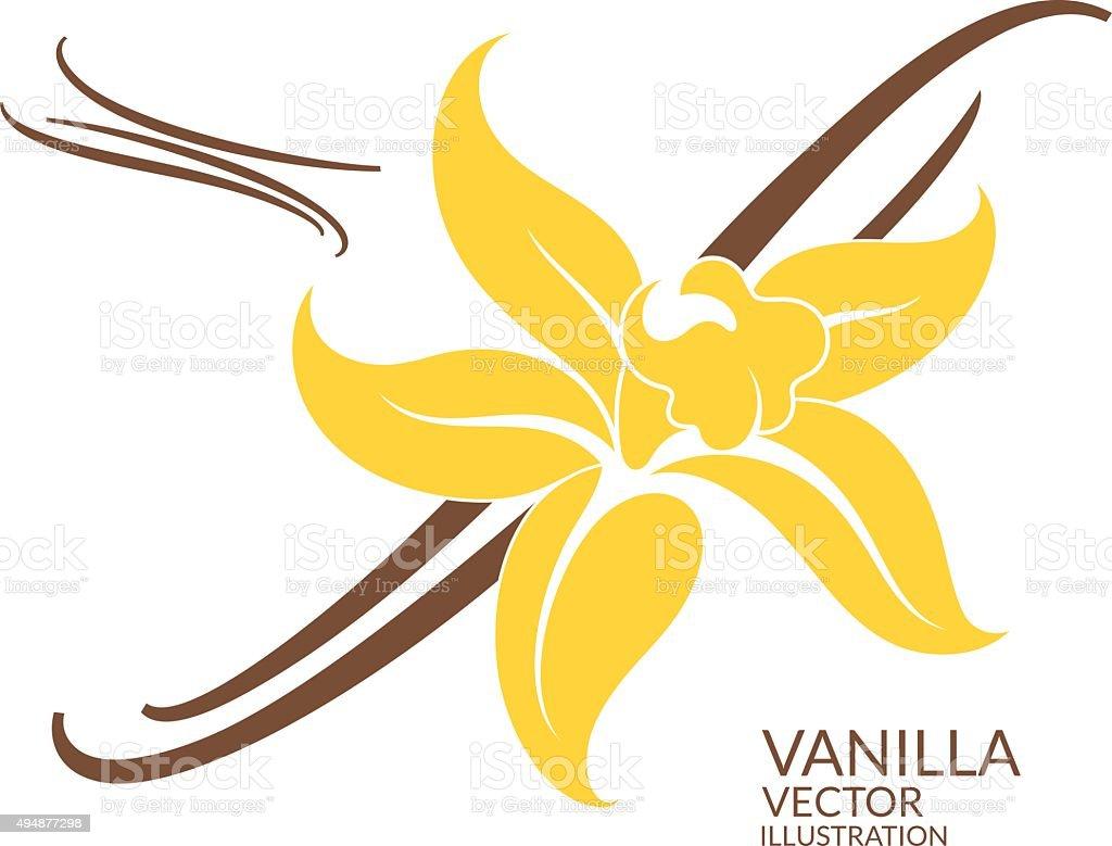 Vanilla vector art illustration