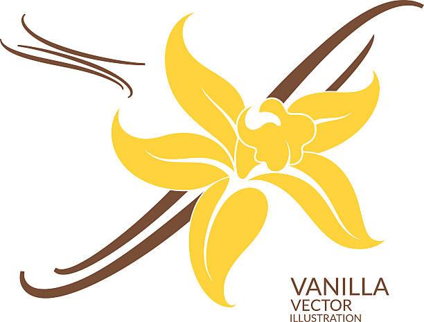 stockillustraties, clipart, cartoons en iconen met vanilla - vanille