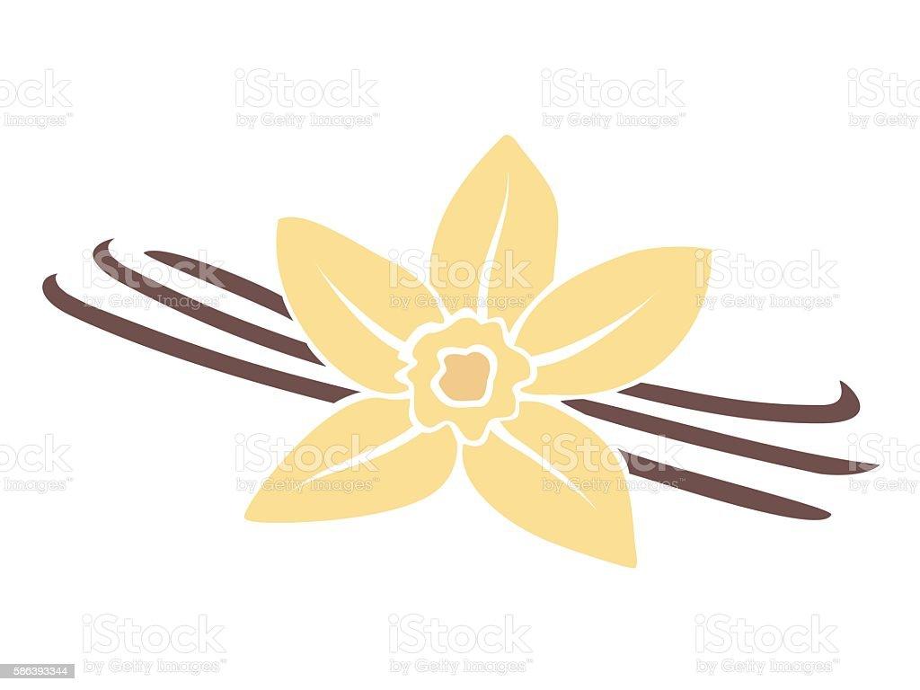 Vanilla Stock Illustration - Download Image Now