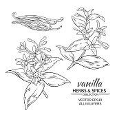 istock vanilla vector set 621141660