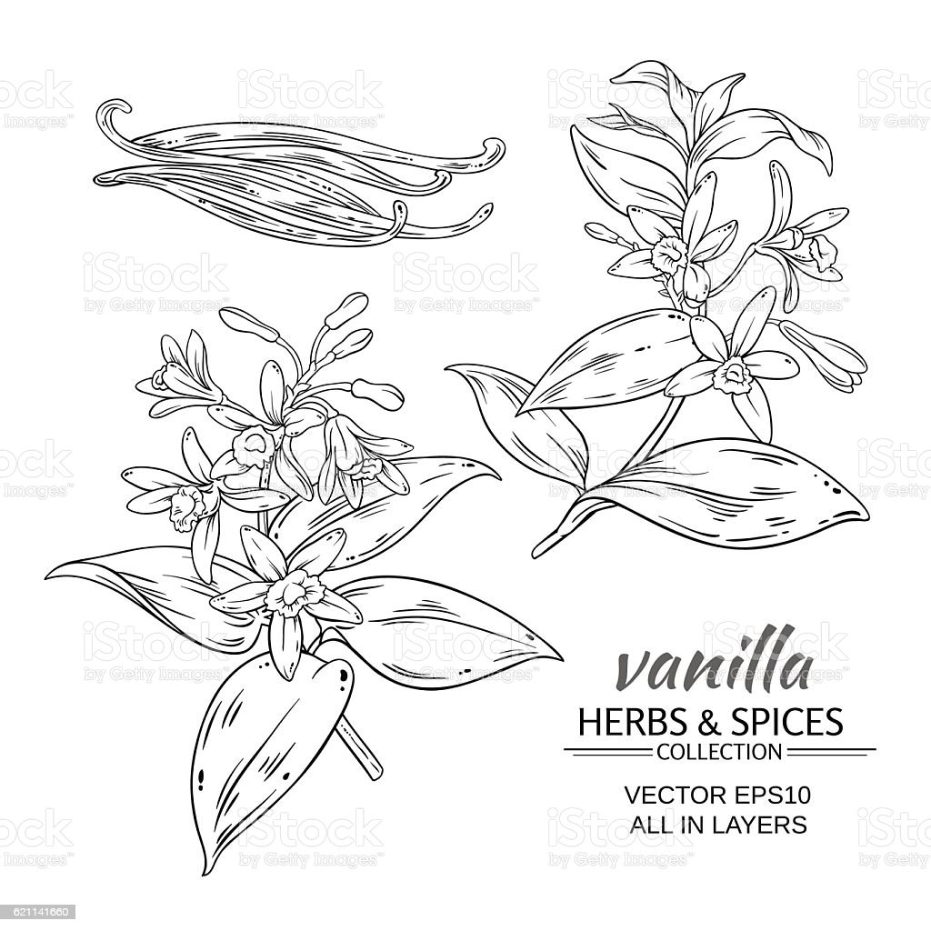 vanilla vector set vector art illustration