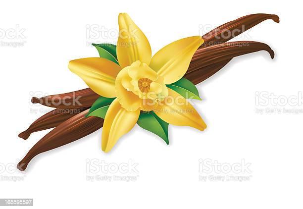 Vannilla flower vector id165595597?b=1&k=6&m=165595597&s=612x612&h=puggnnv6hqbm73h5gsapro8w wadnc se7xu1t0fdfc=