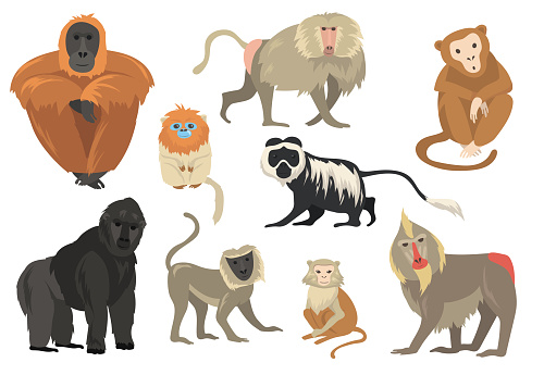 Variety of funny exotic monkeys and apes