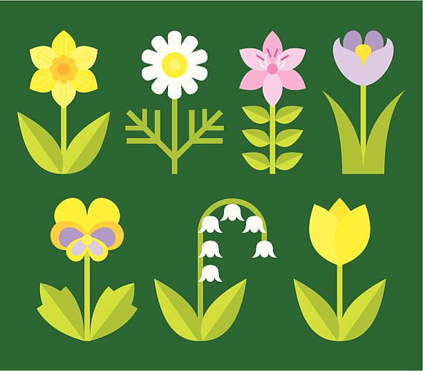 variety of garden flowers  daffodil stock illustrations