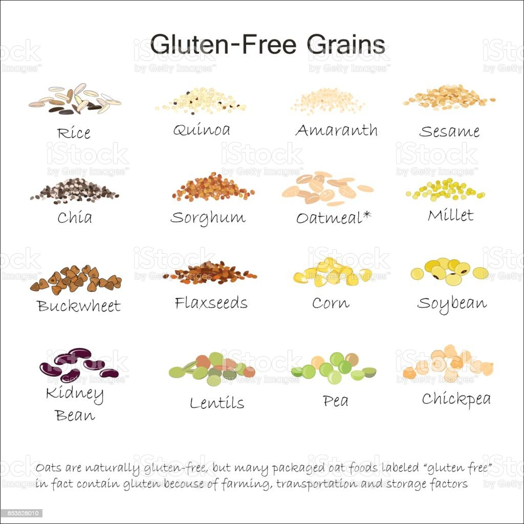 A variety of gluten free grains. Buckwheat, amaranth, rice, millet, sorghum, quinoa, chia seeds, flax seeds, sezam, oatmeal, legumes. Vector illustration vector art illustration