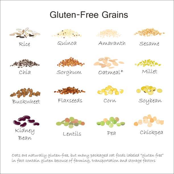ilustrações de stock, clip art, desenhos animados e ícones de a variety of gluten free grains. buckwheat, amaranth, rice, millet, sorghum, quinoa, chia seeds, flax seeds, sezam, oatmeal, legumes. vector illustration - quinoa