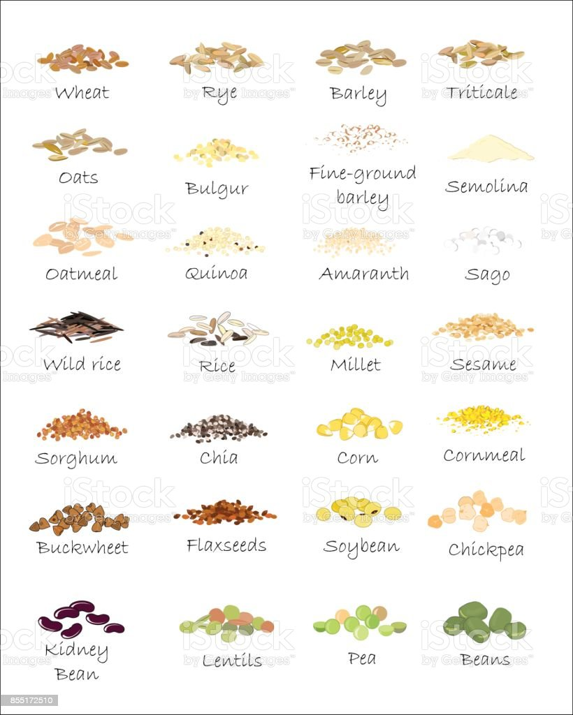 A variety of grains and cereals. Wheat, barley, oats, rye, buckwheat, amaranth, rice, millet, sorghum, quinoa, chia seeds, oatmeal, legumes. Vector isolated vector art illustration