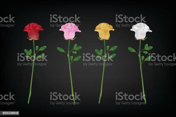 Variety of rose for valentines day vector id835008848?b=1&k=6&m=835008848&s=612x612&h=s7 g7ii8s9rnaelbavyyaertj6efzyiwijgmdsfeunw=