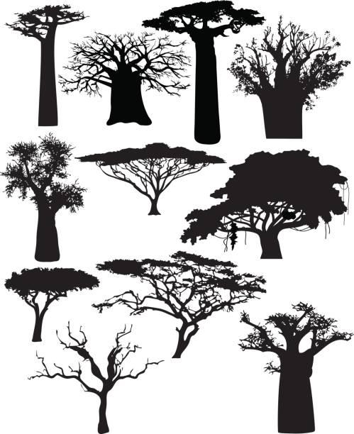 Varios árboles africanos y arbustos - ilustración de arte vectorial