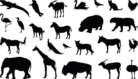 Various animals silhouette