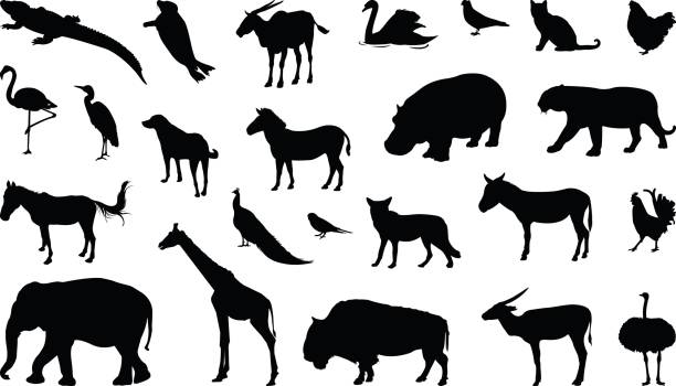 Various animals silhouette vector illustration of various animals silhouette serbia stock illustrations