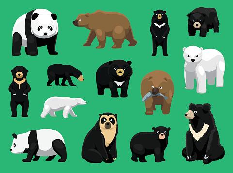 Various Bears Cartoon Vector Illustration
