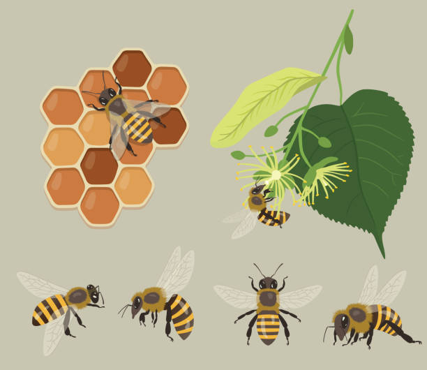 illustrazioni stock, clip art, cartoni animati e icone di tendenza di various bees with honeycomb and flowers - impollinazione