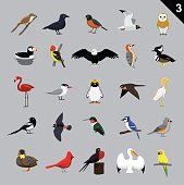 Various Birds Cartoon Vector Illustration 3