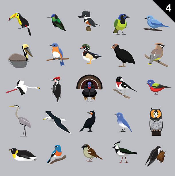 ilustrações, clipart, desenhos animados e ícones de diversas aves desenhos animados ilustração em vetor de 4 - observação de pássaros