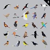 Various Birds Cartoon Vector Illustration 5
