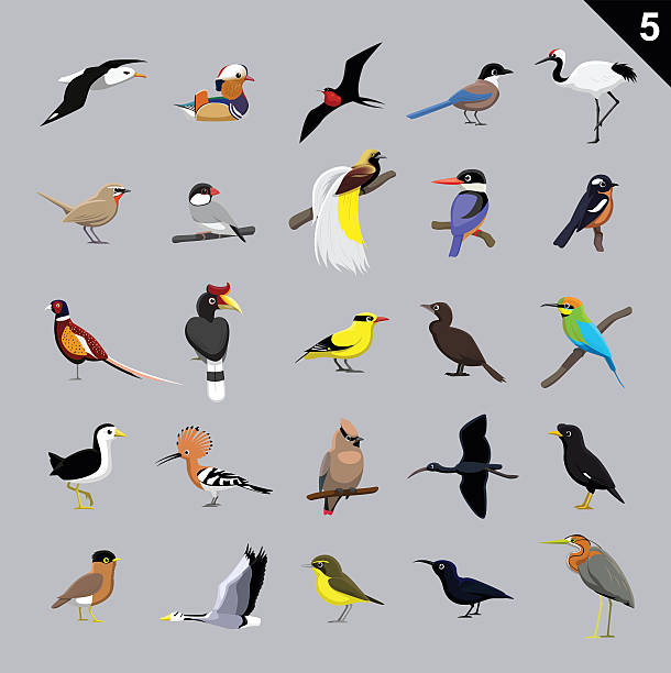 Various Birds Cartoon Vector Illustration 5 Animal Cartoon EPS10 File Format water bird stock illustrations