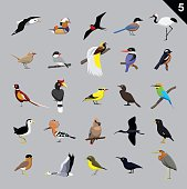 Various Birds Cartoon Vector Illustration 5