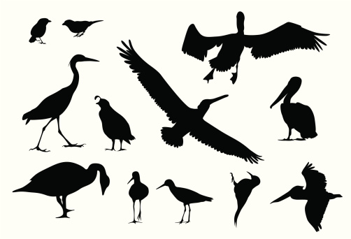 Various Birds Vector Silhouette
