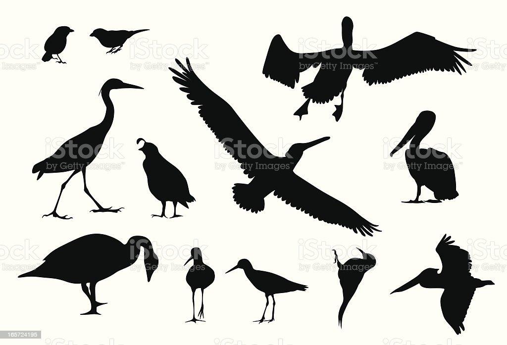 Various Birds Vector Silhouette vector art illustration