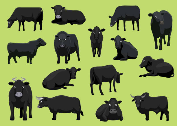 ilustrações de stock, clip art, desenhos animados e ícones de various black cow bull cartoon vector illustration - beef angus
