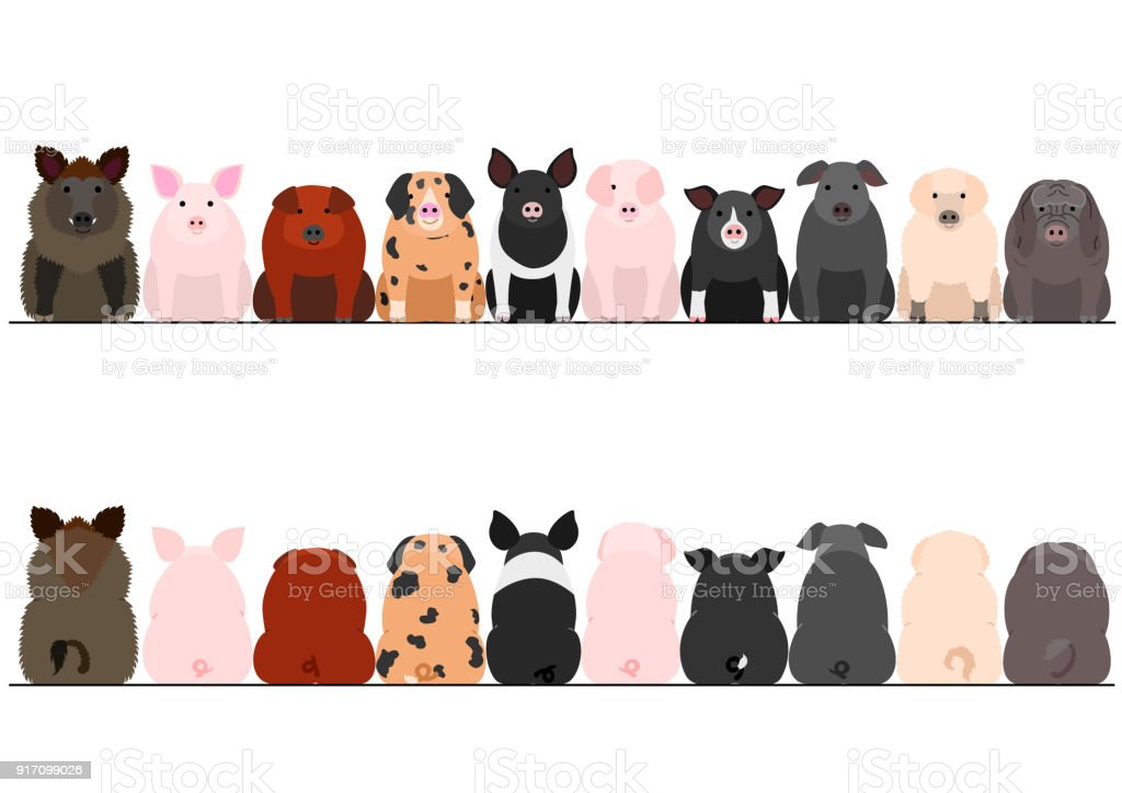 various breeds of pigs front and back border set vector art illustration