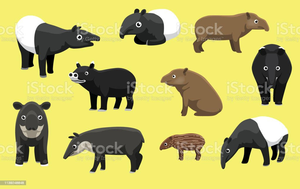 Download Animal Tapir Cartoon JPG