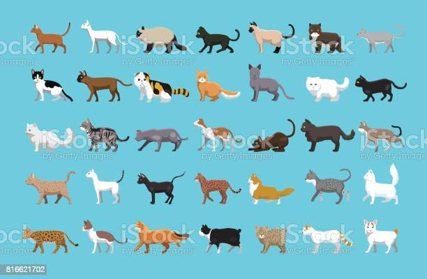 Various cats side view cartoon vector illustration vector id816621702?b=1&k=6&m=816621702&s=612x612&h=cmj9wd4voidkwg3s6igtn9th8rty83lxr3u3z3mmlhg=