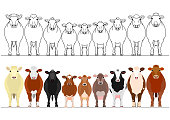 various cattle in a row