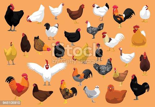 istock Various Chicken Breeds Poultry Cartoon Vector Illustration 945105910