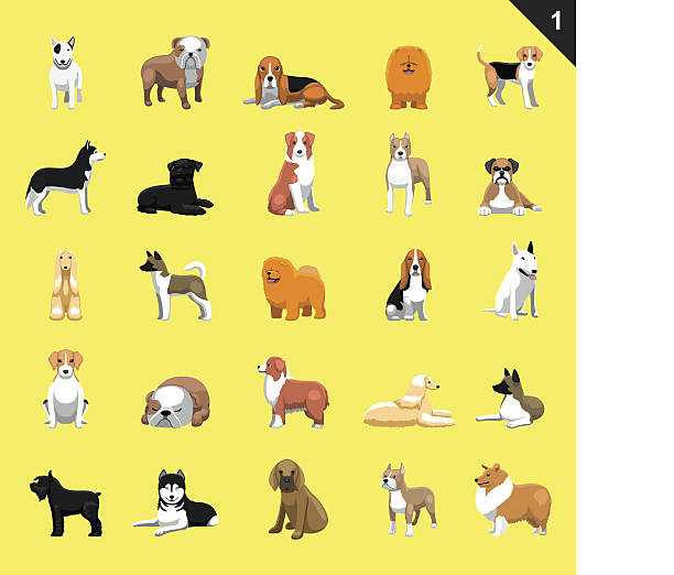 Various Dog Breeds Vector Illustration Set 1 – artystyczna grafika wektorowa