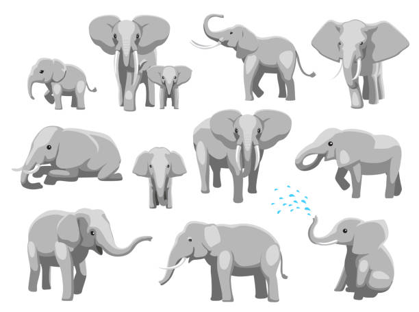 Various Elephant Poses Cartoon Vector Illustration Animal Cartoon EPS10 File Format elephant stock illustrations