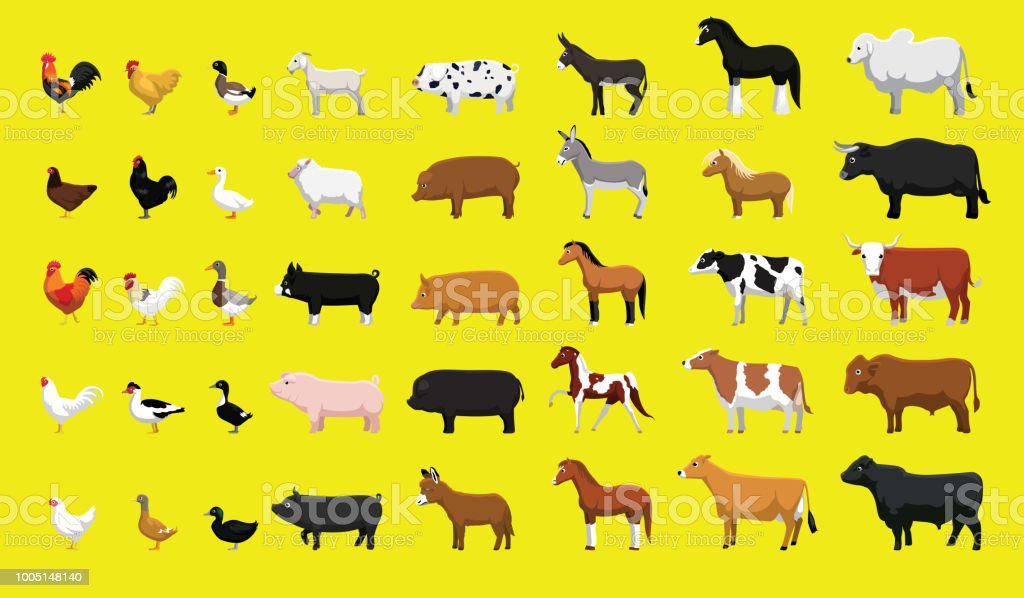 Various Farm Animals Side View Cartoon Vector Illustration Set - illustrazione arte vettoriale