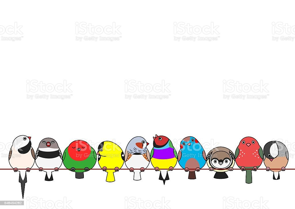 various finches in a row vector art illustration