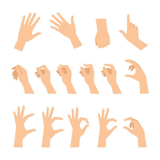 Various gestures of human hands isolated on a white background. Various gestures of human hands isolated  on a white background. Vector flat illustration of female hands in different situations. Vector design elements for infographic, web, internet, presentation. hand stock illustrations