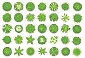 Various green trees, bushes and shrubs, top view for landscape design plan. Set of vector illustrations, isolated on a white background.