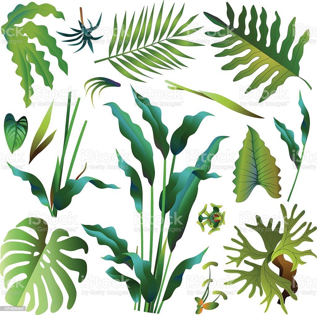 Various Green Tropical Rainforest Leaves Stock Vector Art ...