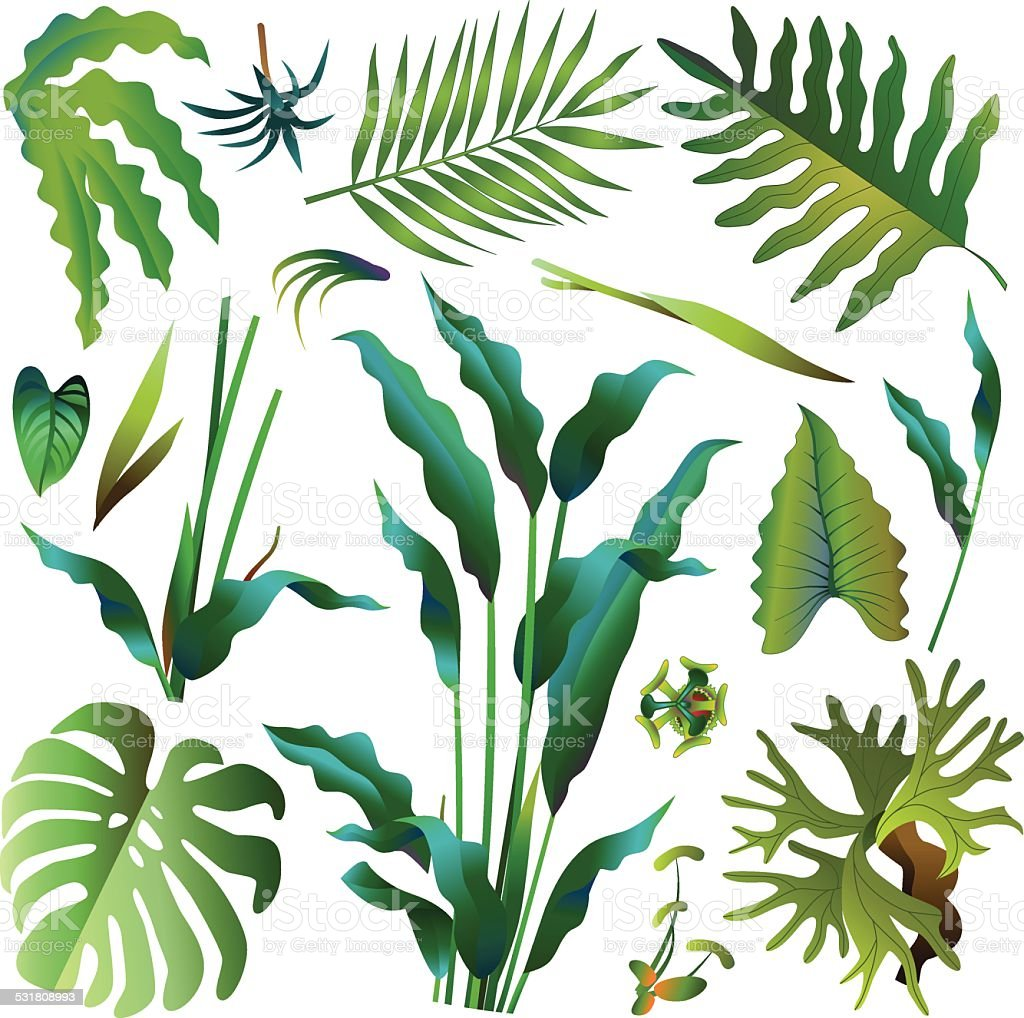 various green tropical rainforest leaves vector art illustration