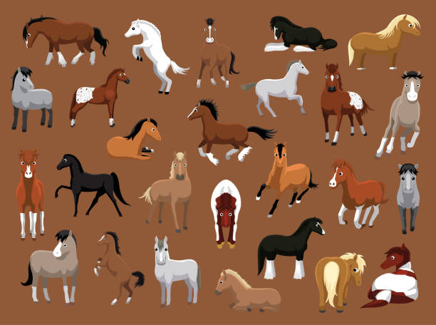 various horse poses cartoon vector illustration - pony stock illustrations